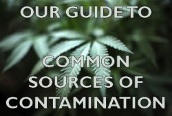 Sources of Cannabis Contamination